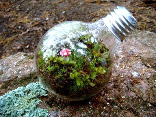 Como-reaproveitar-lâmpadas-queimadas-terrarium