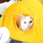 Como fazer uma barraca para gatos