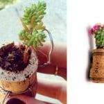 Como plantar dentro de rolhas – DIY