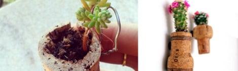 Como plantar dentro de rolhas - DIY