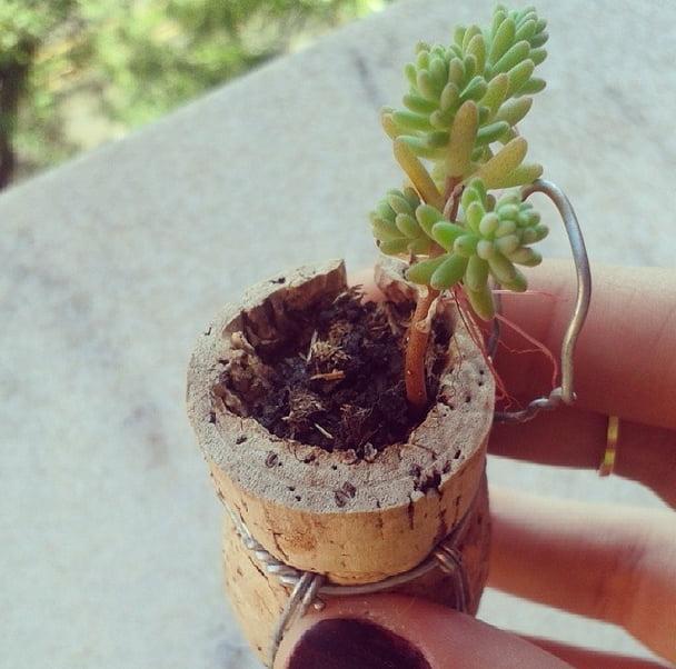 como-plantar-dentro-de-rolhas-mini-suculenta