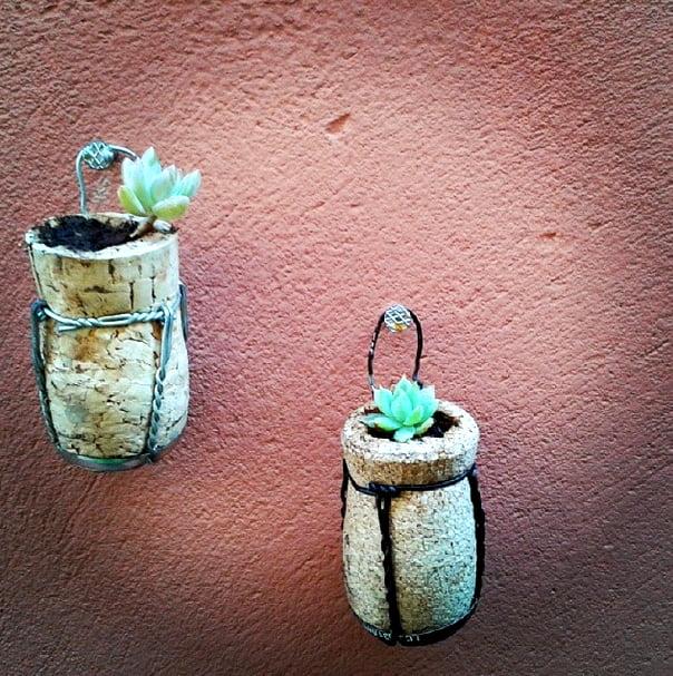 como-plantar-dentro-de-rolhas-suculentas