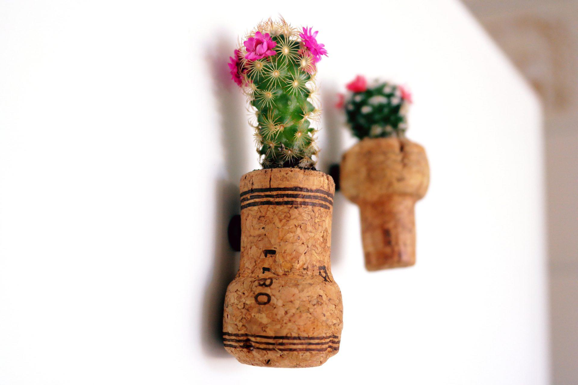 como-plantar-dentro-de-rolhas
