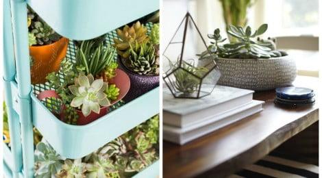 5 plantas ideais para apartamentos
