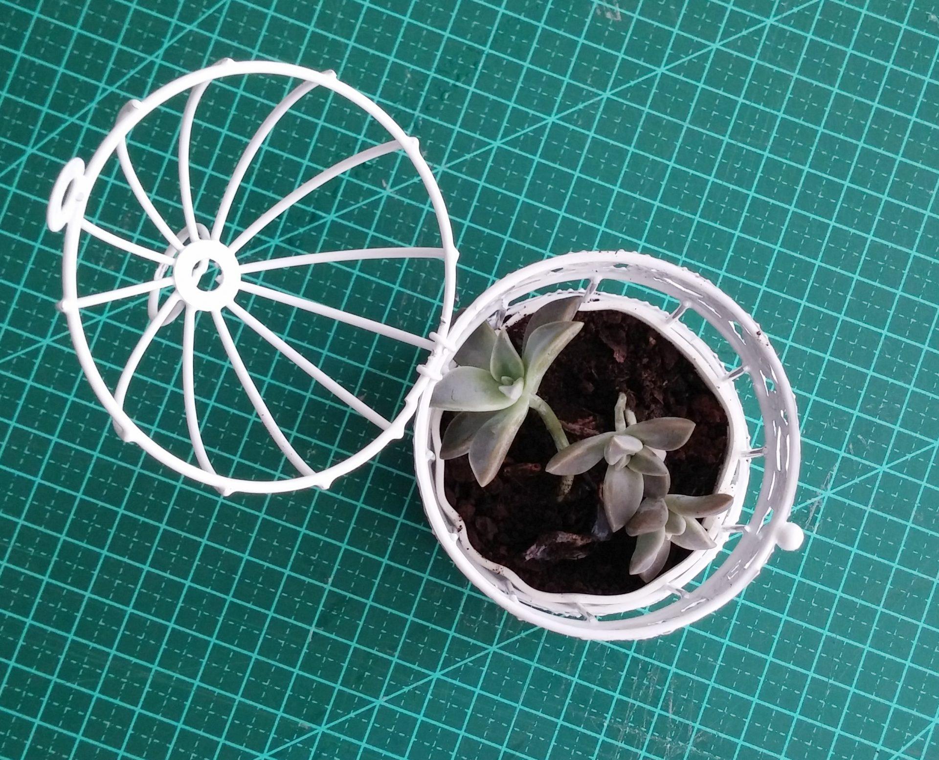 gaiola-na-decoração-suculenta