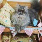 Como fazer beliche para gatos com caixotes