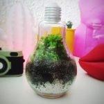 Como fazer terrário em uma lâmpada – DIY