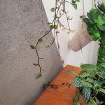 Como fazer parede de cimento queimado com vasos para plantas